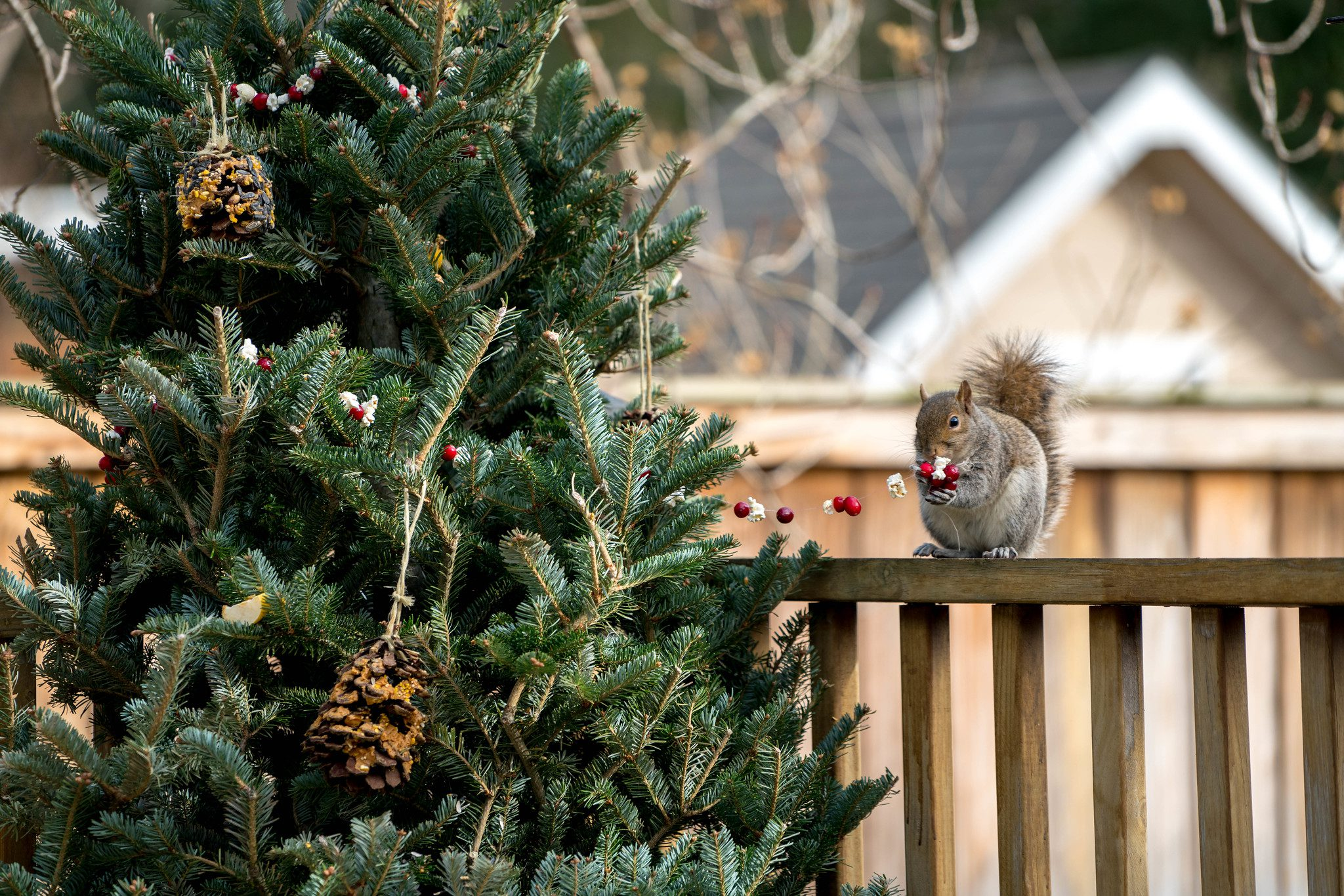 Christmas tree with a squirrel